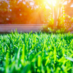 It's Spring Tune-up Time For Your Lawn!