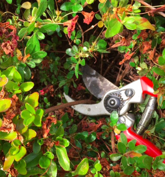 Choosing the Right Pruning Tool for the Job