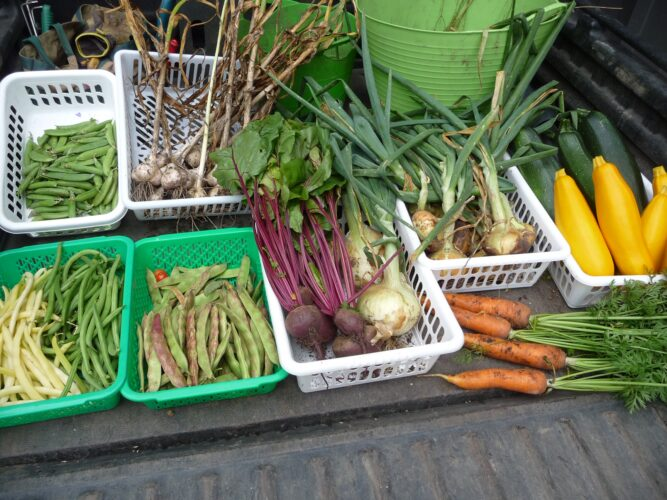 Crop Rotation in the Vegetable Garden: A Crucial Planning Step