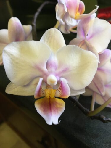 How Do We Keep Those Orchids Blooming?
