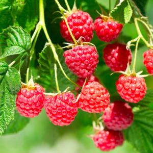 How Do You Like Those Raspberries?