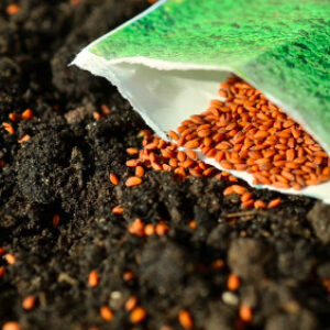 An Introduction to Seed Saving