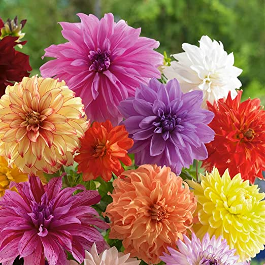 It's Time to Plant Summer Flowering Bulbs!