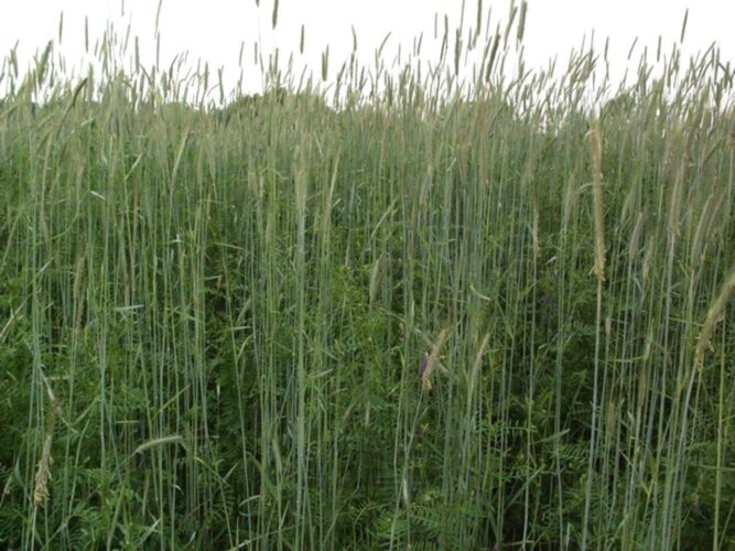 What is All the Fuss About Cover Crops?